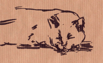 croquis chat04