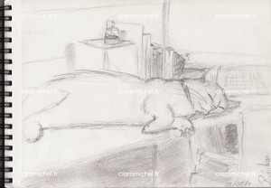 croquis chat