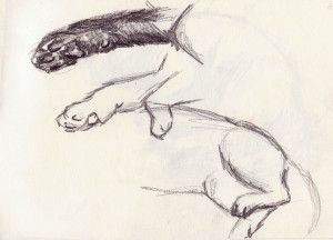 croquis chat01