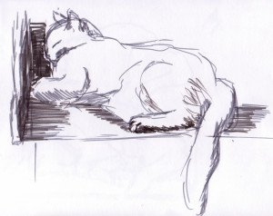 croquis chat05
